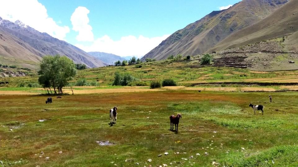 Thalay Valley Baltistan (8)