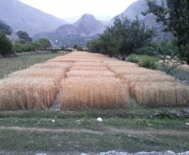 گوپس: محکمہ زراعت کے زیر اہتمام جدید کاشتکاری اور فوڈ پراسسنگ کے حوالے سے تربیتی ورکشاپ کا انعقاد