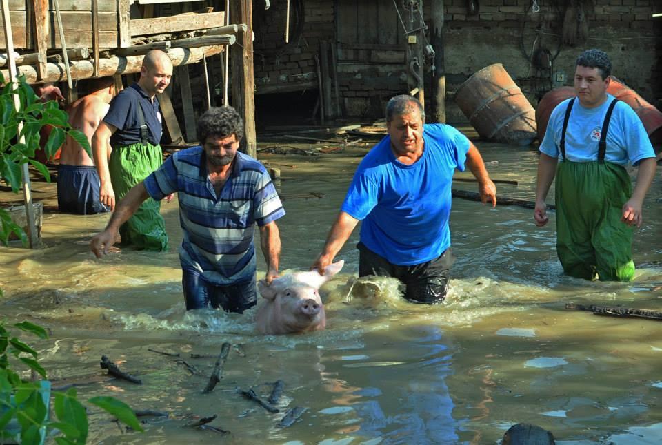 """Спасяването на животните в Мизия. Снимка: """"Четири лапи"""""""