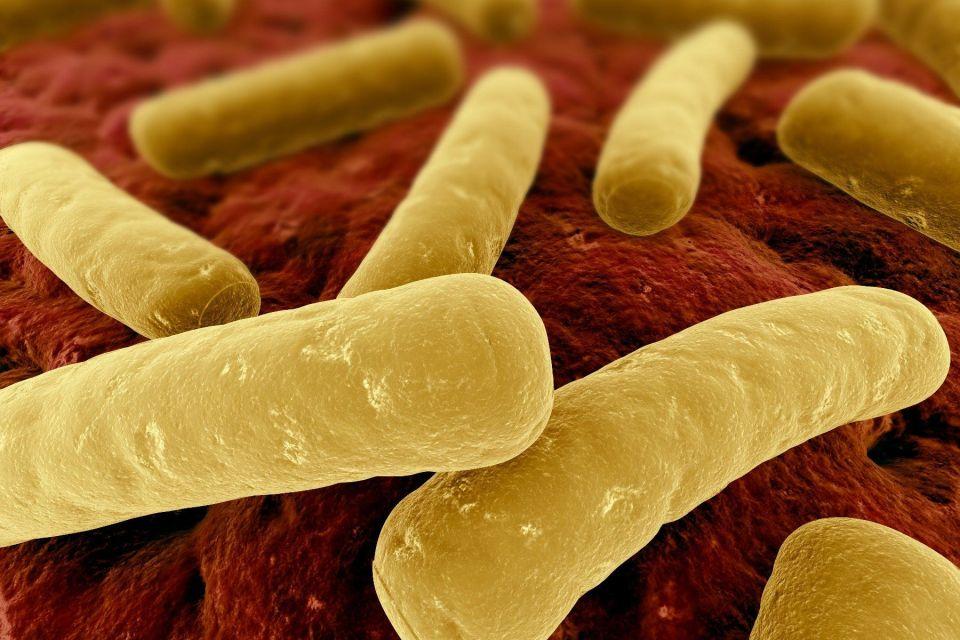 Туберкулозната бактерия