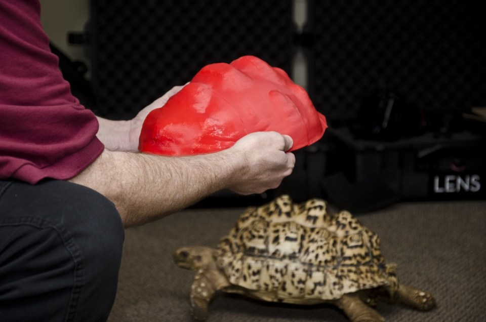 костенурка 5