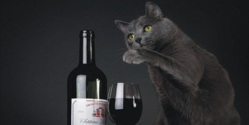 wine-cat-e1382962620920