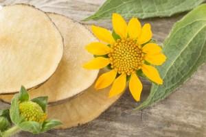 Yacon in mundgerechte Scheiben geschnitten: Sie schmeckt pur oder in der Pfanne gebraten mit Süßkartoffeln und Ei