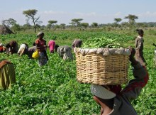 Edesiri Tasked Governors On Support For Agricultural Devt