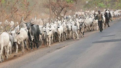Solutions To Herdsmen Problem In Niger Delta Region