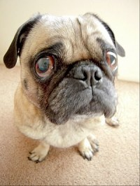 Remove Urine Smells from Artificial Turf, Remove Pet Urine ...