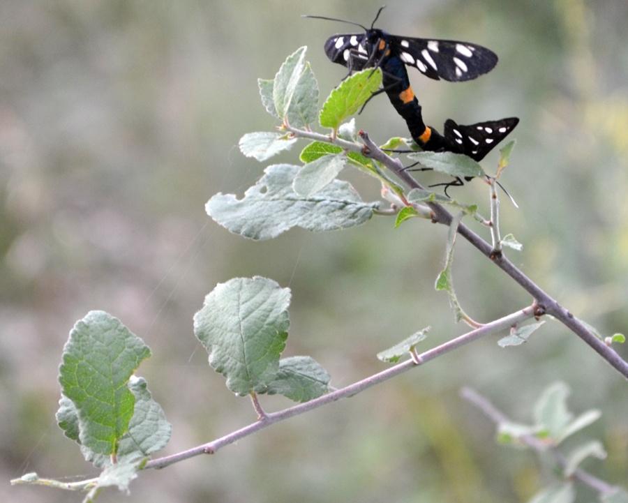 Reproducere-fluturi-observator