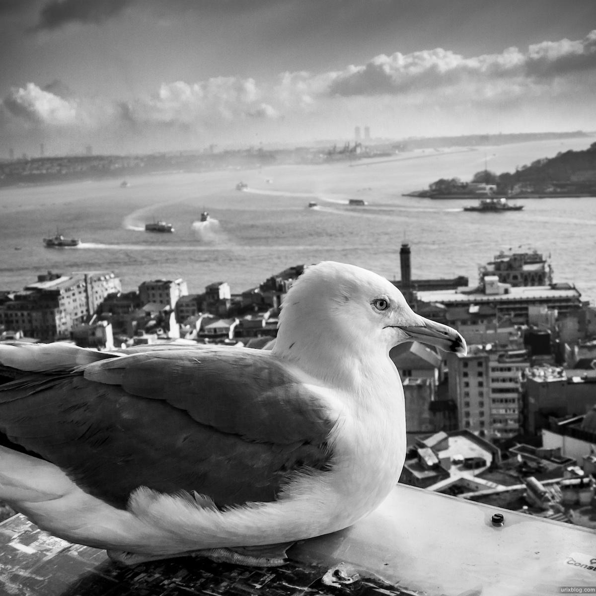 2013, Чайка, Галатская башня, панорама, Босфор, Босфорский пролив, Стамбул, Турция, море, корабли, зима