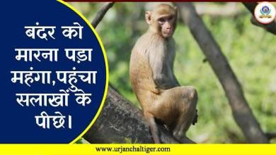 Photo of बंदर को मारना पड़ा महंगा, आरोपी पहुंचा सलाखों के पीछे।