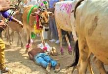 Photo of दीपावली के दूसरे दिन क्यों होता है मौत का खेल!