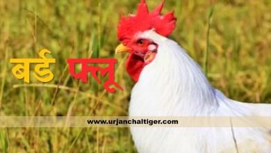 Photo of मध्य प्रदेश के इन 32 जिलों में मुर्गियों में बर्ड फ्लू की पुष्टि हुई है।