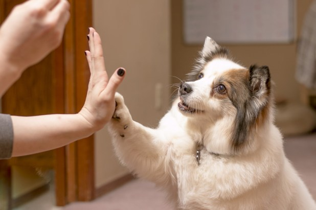 Puppy Training: How to Train Your Puppy - Easy Tips & Tricks