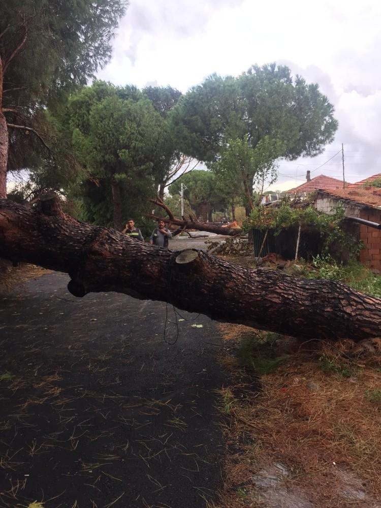 Ağaçlar Ve Elektrik Direği Yola Devrildi