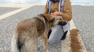 İzmir'de Sokak Hayvanları İçin 100 Ton Mama