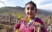 Üzüm Bağları Yalancı Bahara Aldandı