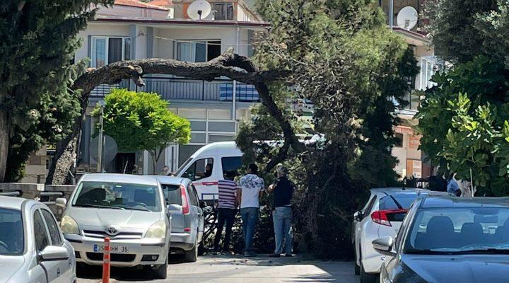 Urla'da bir ağaç devrilme vakası daha