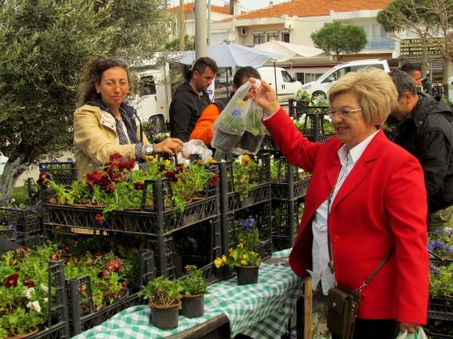 Çeşme Belediyesinden Kadınlara Çiçek Fidanı