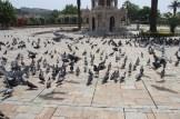 İzmirde Sıcak Hava Rekor Seviyede
