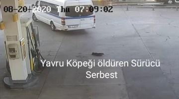 İzmirde Yavru Köpeği Ezerek Öldüren Sürücü Serbest Kaldı