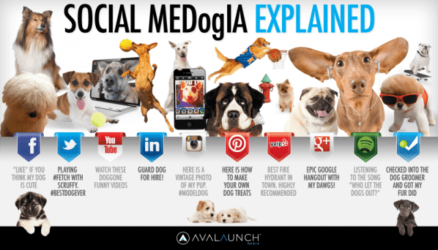 Social MEDogIA Explained