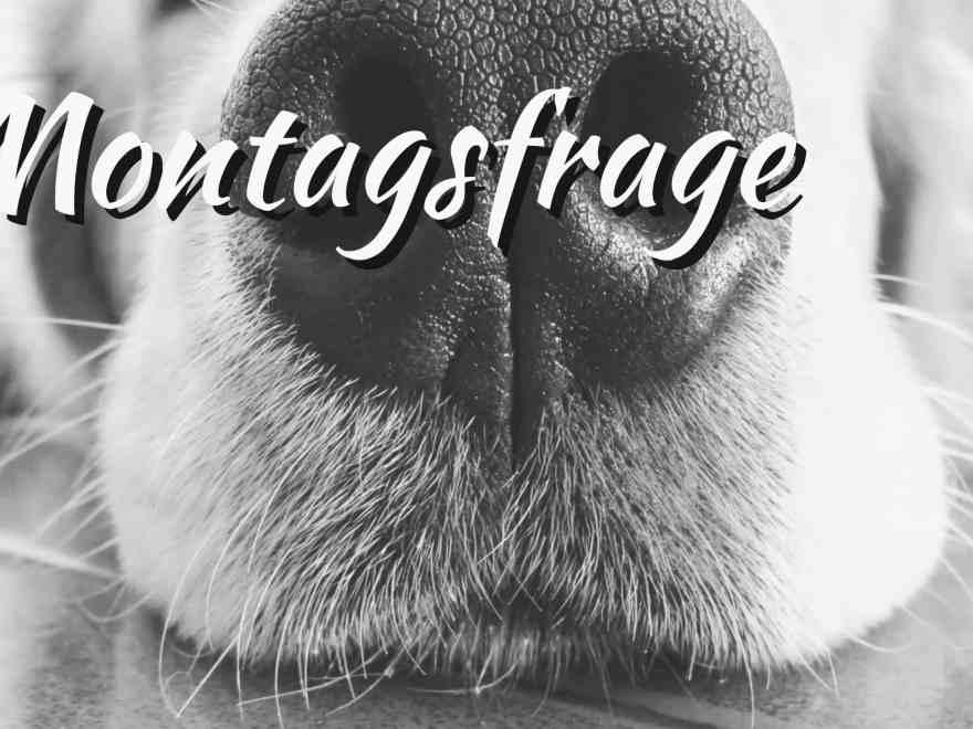 montagsfrage: Wohnungssuche mit Hund