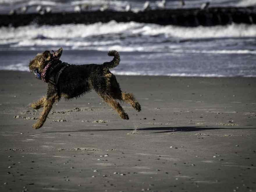 Reiseschutz fuer den Hund