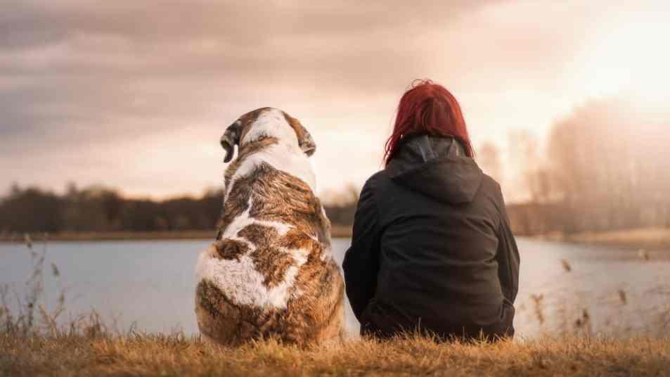Der Hund, unserem besten Freund auf der Spur