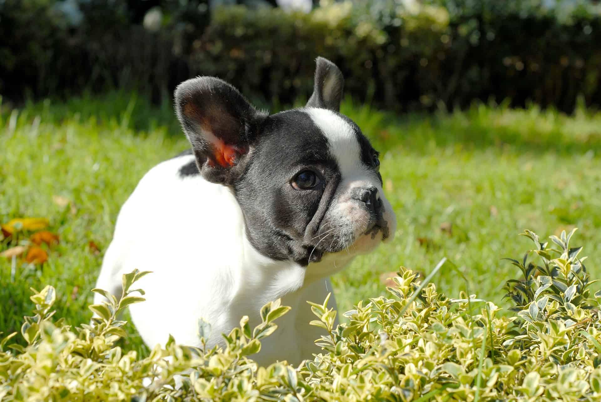 Puppy 264736 1920