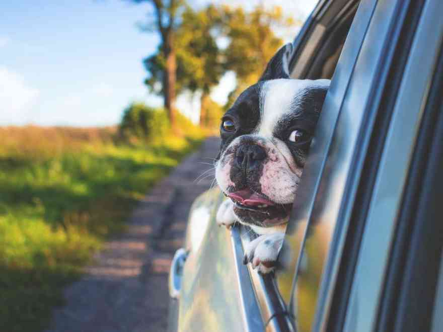 Urlaub mit dem Hund – Ist das überall möglich?