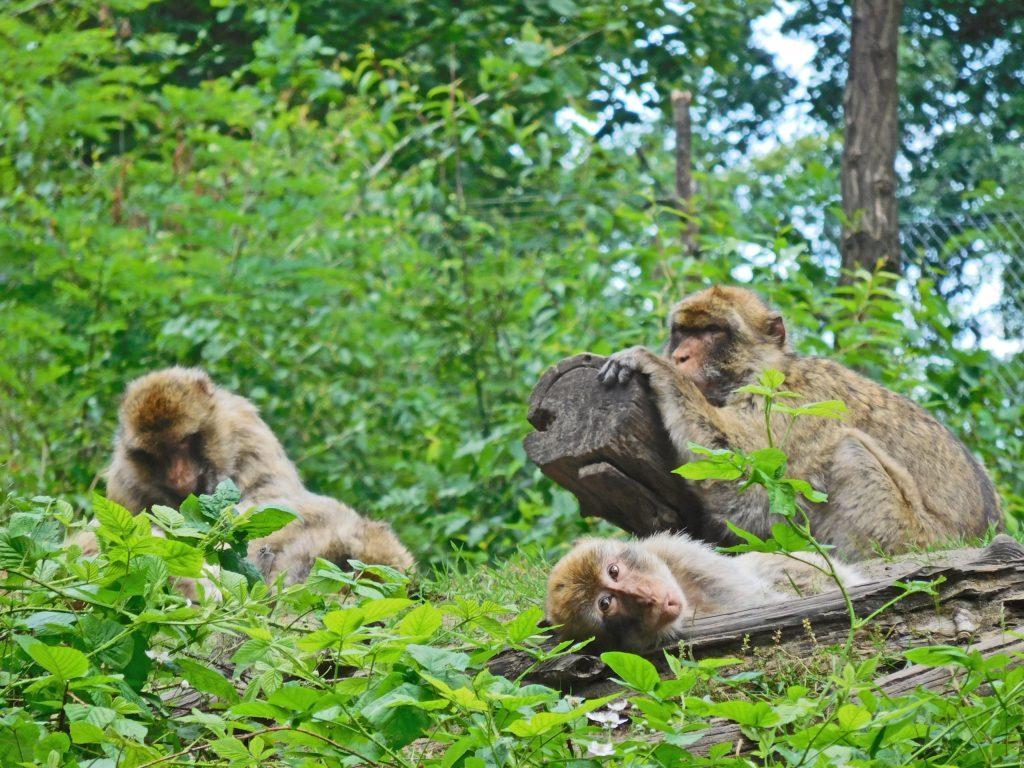 Im Tierpark Ueckermünde sind die Bewohner zum Greifen nah.
