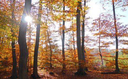 Wie gemalt: Eingebettet zwischen Wasser und Wäldern liegt das Stettiner Haff.