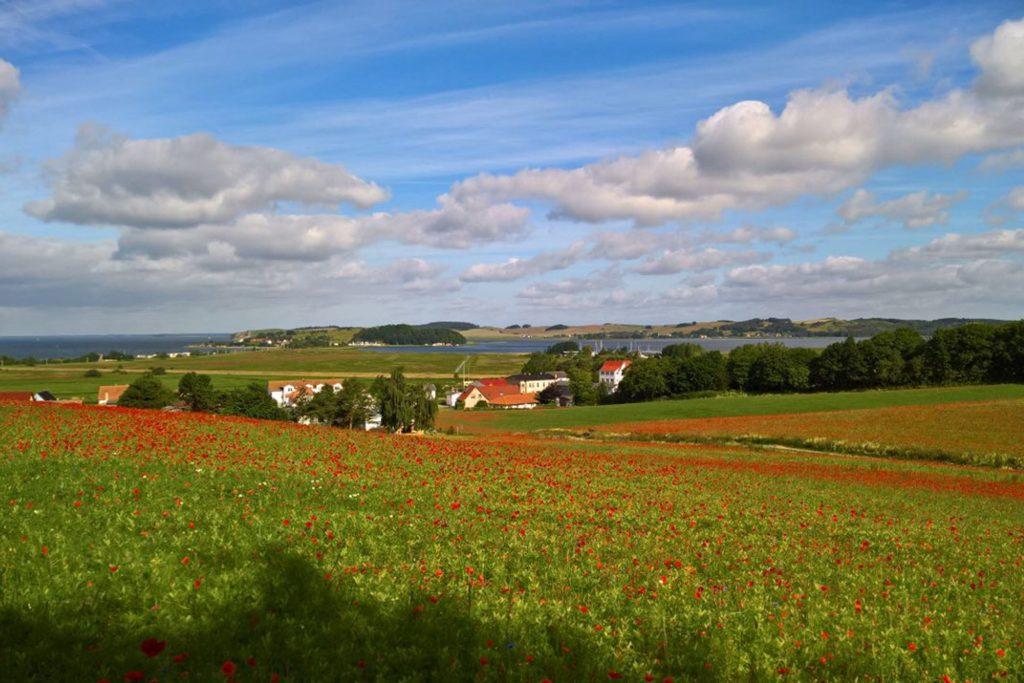 Die reizvolle Landschaft der Halbinsel Mönchgut lässt sich bei einer Wanderung durch Wiesen und Felder besonders gut entdecken.