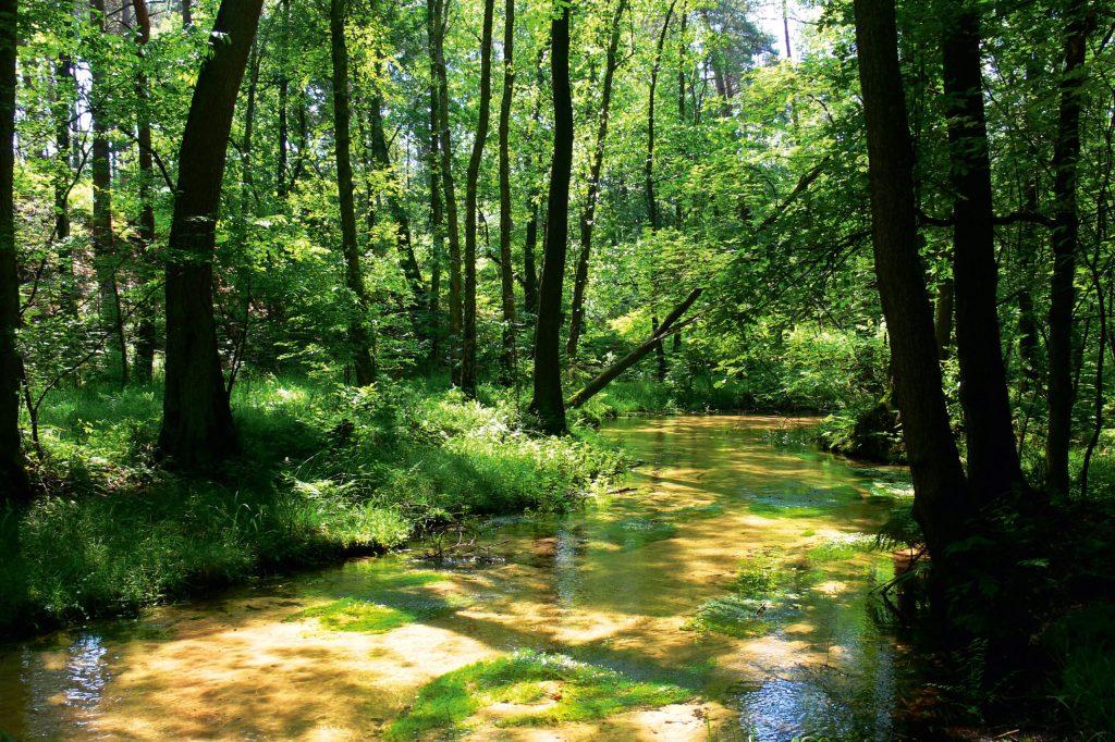 Besonders reizvoll ist eine Wanderung im wildromantischen Furlbachtal.
