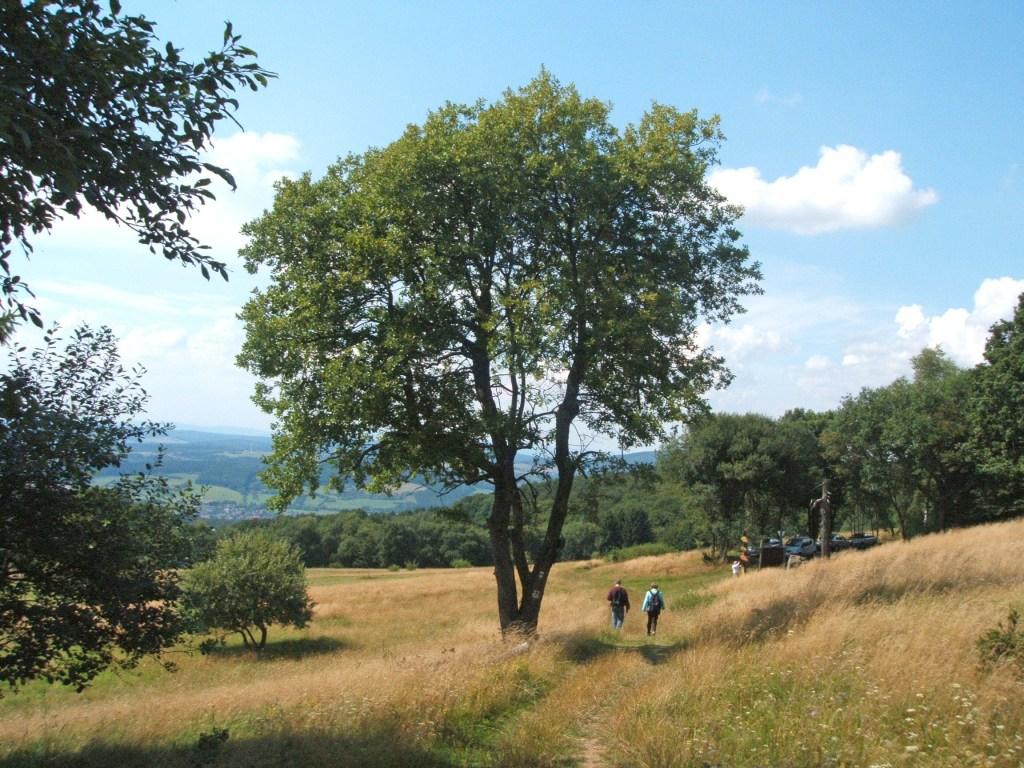 """Der Premiumweg """"P1 Hoher Meißner"""" gilt als einer der schönsten Wanderwege in Hessen. Er führt durch tiefe Wälder aber auch offene Landschaften, wie die Hausener Hute."""