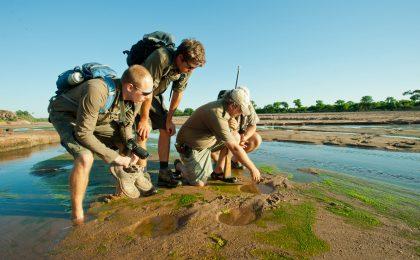 Mit dem naturnahen Kurs ist man weit ab der üblichen Touristenpfade tief in den Nationalparks unterwegs und erfährt das Leben als Safari Guide.