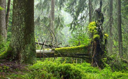 Erlebnistouren im Thüringer Wald