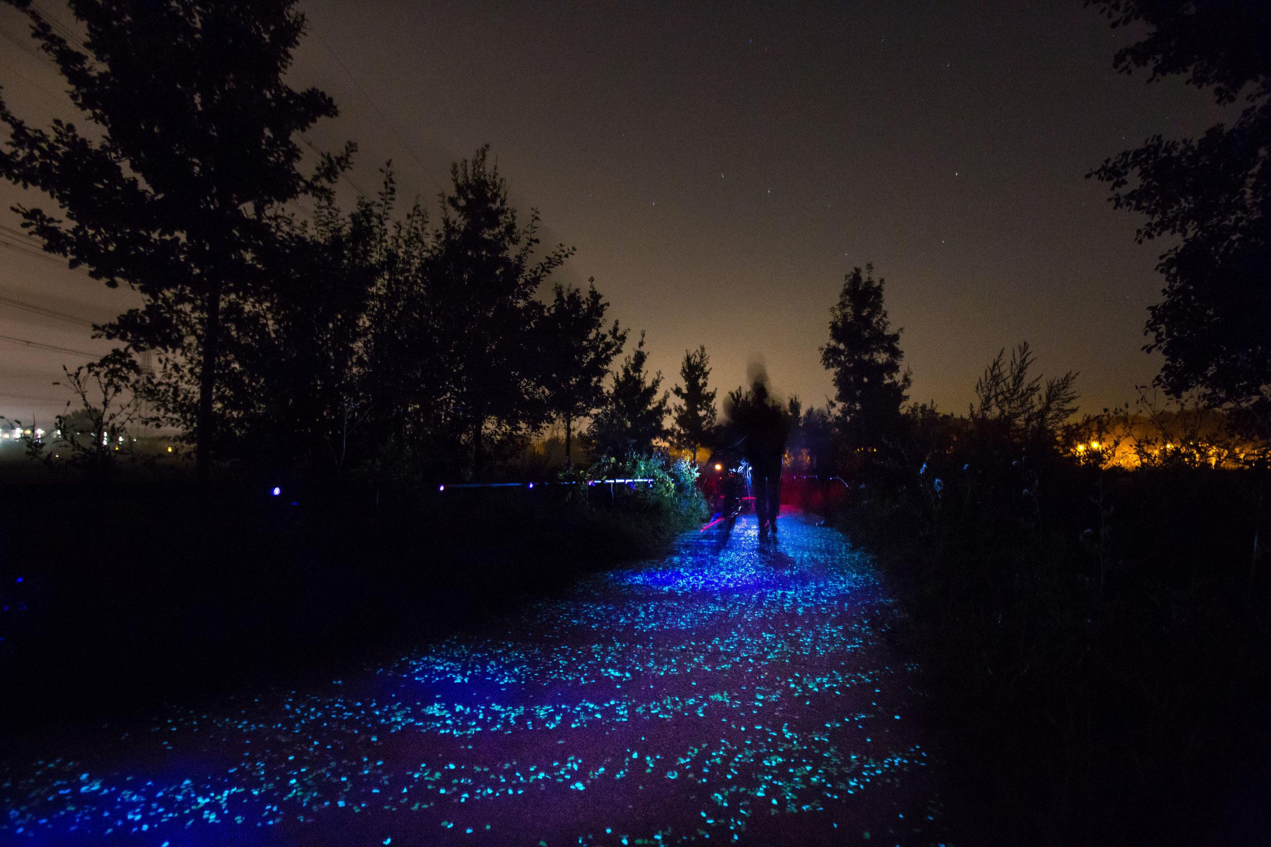 Van Gogh Roosegarde Radweg in Nordbrabant bei Nacht