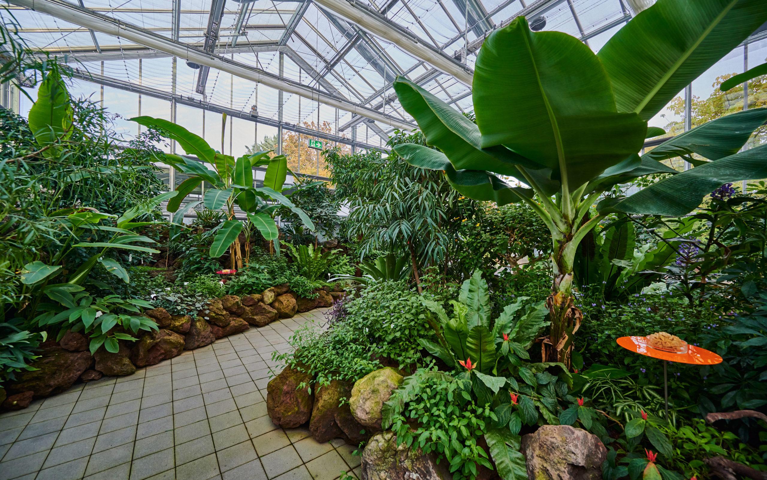 Das Blüten- und Schmetterlingshaus im Frankfurter Palmengarten