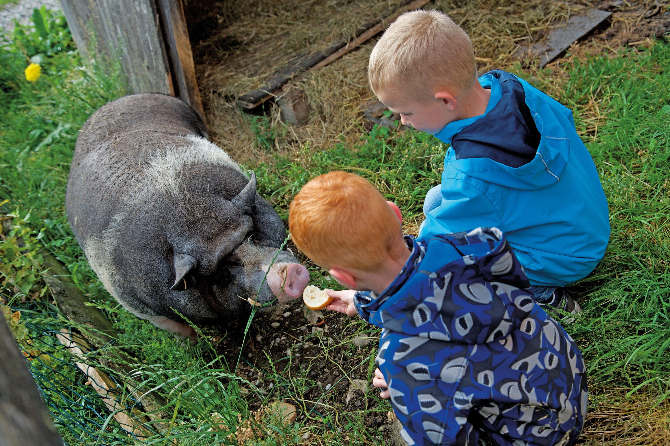 besuch auf dem Bauernhof im Familienurlaub im Allgäu