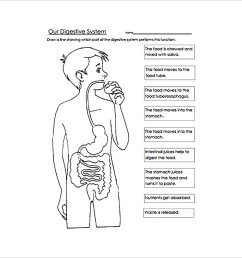 Digestive System Worksheet Packet   Printable Worksheets and Activities for  Teachers [ 1247 x 1216 Pixel ]
