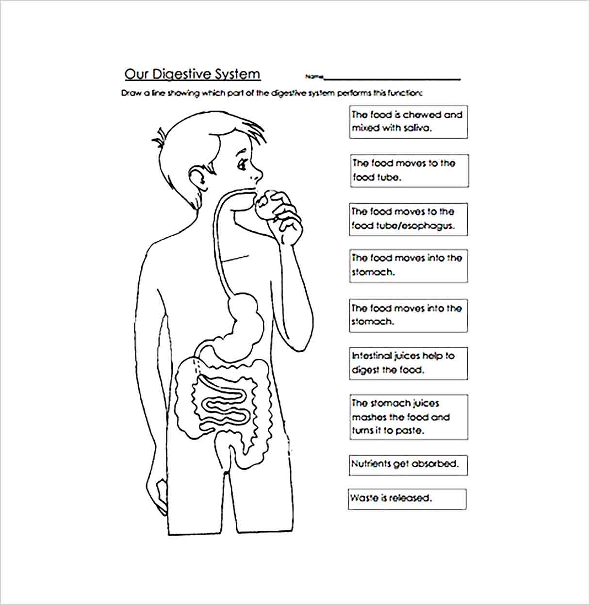 hight resolution of Digestive System Worksheet Packet   Printable Worksheets and Activities for  Teachers