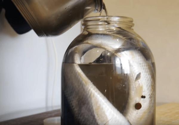 Остывшим рассолом заливаем селедку
