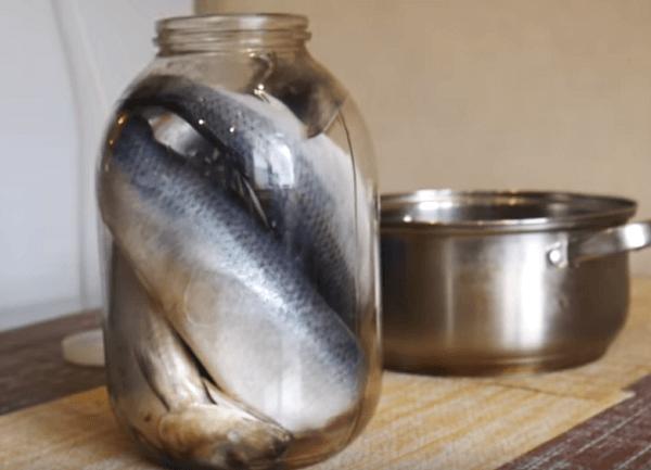 Mettre du poisson dans un pot