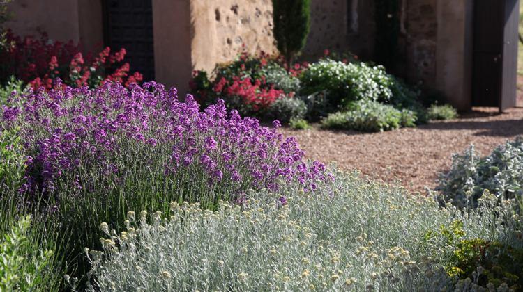 Jardin sec à Tolède