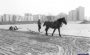 Koń na Placu Wielkiej Przygody. Sądząc po workach, koń przygotowuje ziemię pod sianie trawy? Fot. Włodzimierz Pniewski, www.garnek.pl/zdyrma