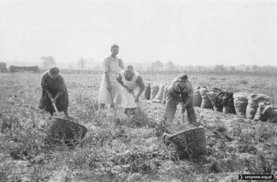 Prace polowe gdzieś w okolicach Wyczółek. Lato 1950 roku, zdjęcie z kolekcji Kazimierza Laskowskiego.
