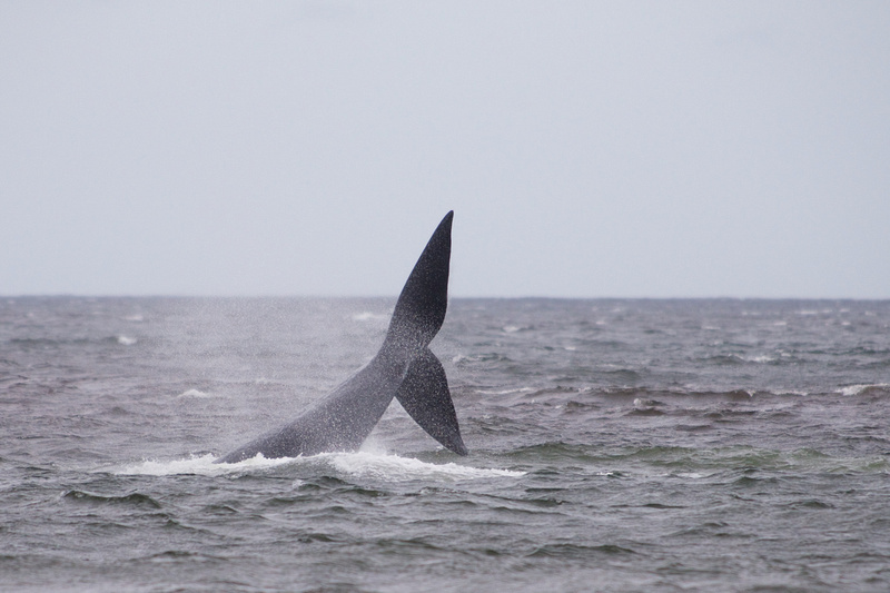 Uruguay in Photos  Whales 2015