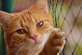 cat-1044750__180
