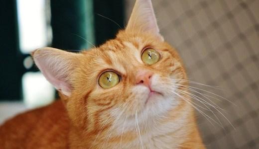 猫の膀胱炎(特発性膀胱炎)の原因や症状と対処法、治療費用など!