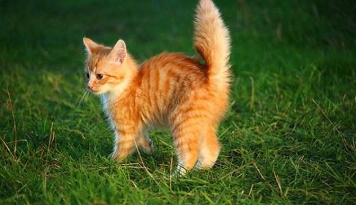 猫のクリプトコッカス症の原因と症状・治療法は?